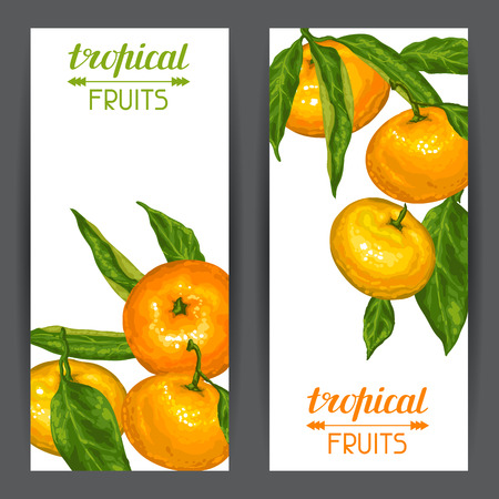 Banners with mandarins. Tropical fruits and leaves.