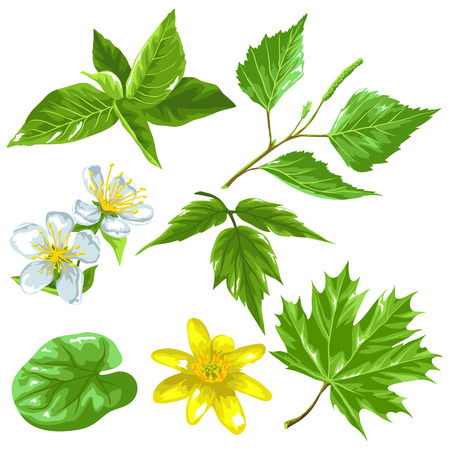 spring bud: Spring green leaves and flowers. Set of plants, twig, bud Illustration