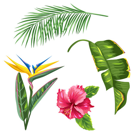 bird of paradise flower: Tropical leaves and flowers set. Palms branches, bird of paradise flower, hibiscus Illustration