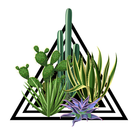 Print with cactuses and succulents set. Plants of desert