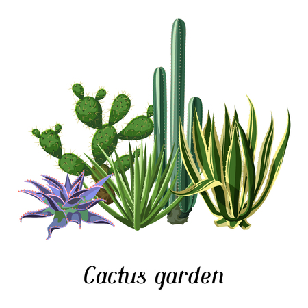 Card with cactuses and succulents set. Plants of desert. Illustration
