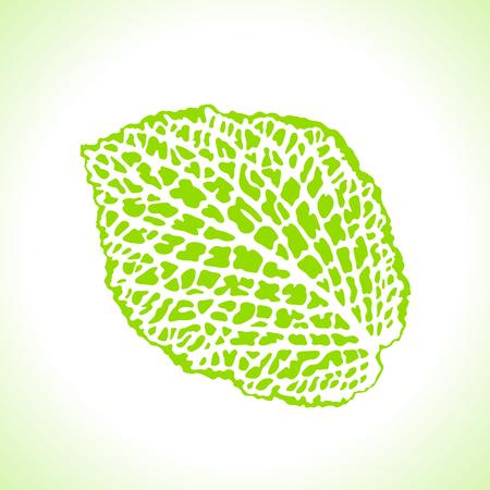 macro leaf: Decorative leaf isolated. Natural detailed macro illustration. Illustration