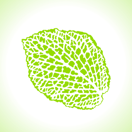 Decorative leaf isolated. Natural detailed macro illustration. Illustration