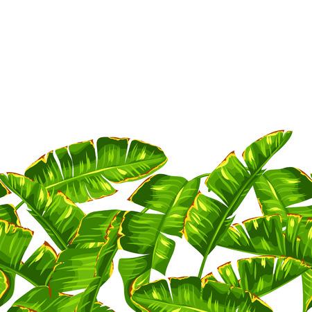 sin patrón, con hojas de palma plátano. Decorativo follaje tropical