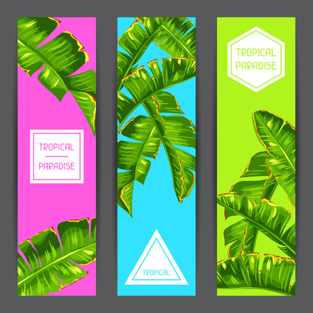 foliages: Banners with banana palm leaves. Decorative tropical foliage
