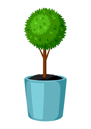 Boxwood topiary garden plant. Decorative tree in flowerpot