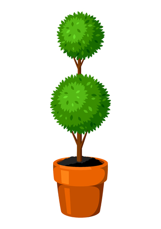 Boxwood topiary garden plant. Decorative tree in flowerpot