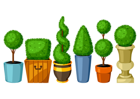 Boxwood topiary garden plants. Set of decorative trees in flowerpots Illustration