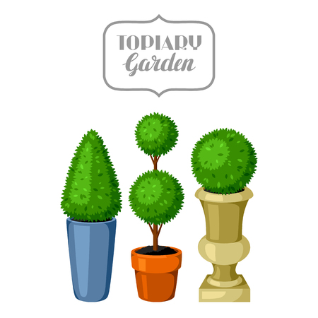 plants and trees: Boxwood topiary garden plants. Decorative trees in flowerpots