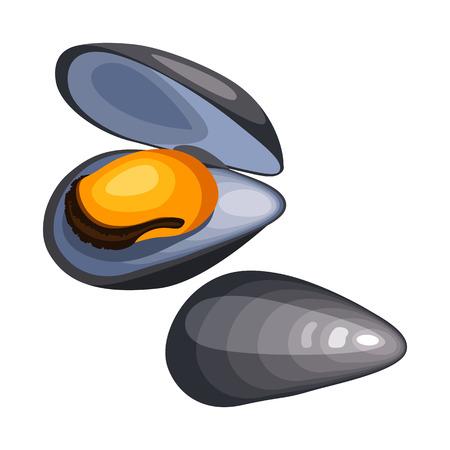 シェルのムール貝。白い背景のシーフードの隔離された図