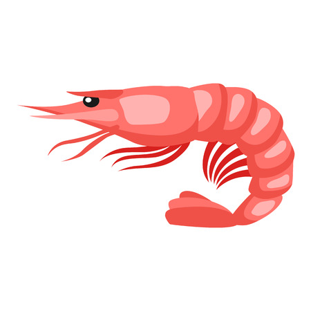 krill: Cooked tiger shrimp. Isolated illustration of seafood on white background Illustration