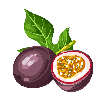 passion  ecology: Passion fruit isolated on white background. Illustration of tropical plant.