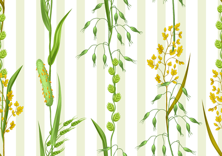 wild oats: Seamless pattern with herbs and cereal grass. Floral ornament of meadow plants