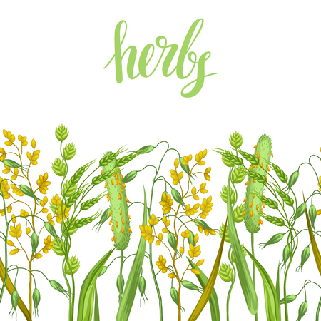 wild oats: Seamless border with herbs and cereal grass. Floral ornament of meadow plants