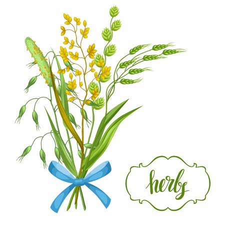 weeds: Bouquet with herbs and cereal grass. Floral design of meadow plants