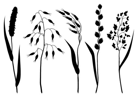 wild oats: Set of herbs and cereal grass silhouettes. Floral collection with meadow plants