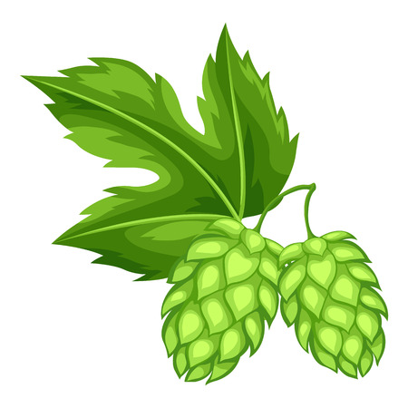Green hops with leaf. Illustration for Oktoberfest. Vettoriali