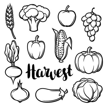 Harvest set of fruits and vegetables. Autumn seasonal illustration