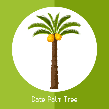 Date palm tree. Illustration of exotic tropical plant. Illustration