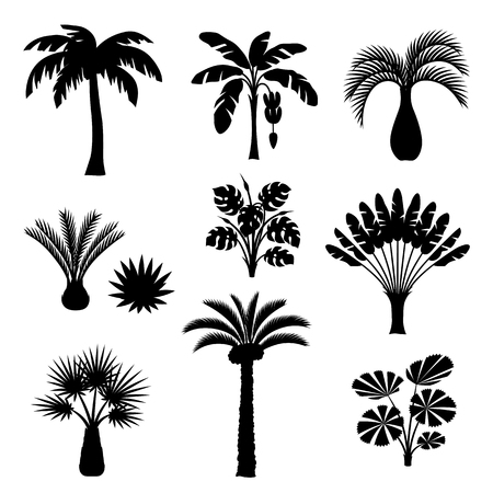 Tropical palm trees set. Exotic tropical plants. Illustration of jungle nature.
