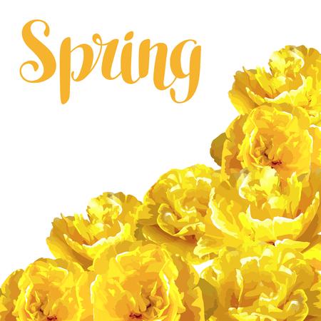 Frühlingshintergrund mit flaumigen gelben Tulpen . Schöne realistische Blumen und Knospen Standard-Bild - 94665823