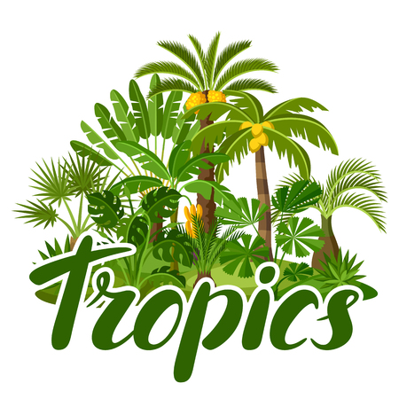 Card with tropical palm trees. Exotic tropical plants Illustration of jungle nature. Illustration