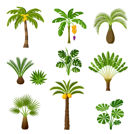Tropical palm trees set. Exotic tropical plants Illustration of jungle nature.