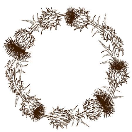 Decorative wreath with onopordum acanthium. Scottish thistle. Illustration