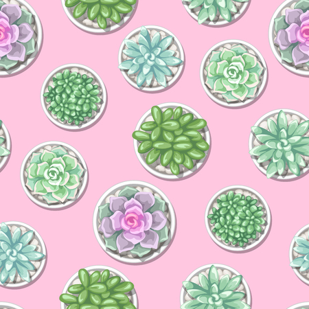 Seamless pattern with succulents. Echeveria, Jade Plant and Donkey Tails.