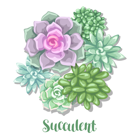 Card with succulents. Echeveria, Jade Plant and Donkey Tails.