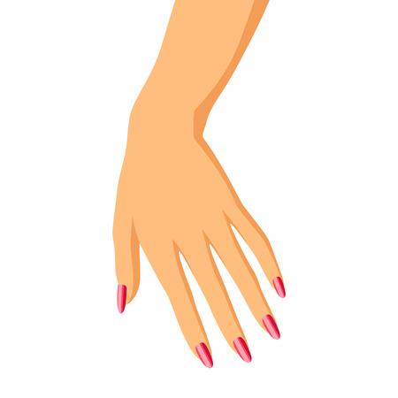 Illustration of woman hand. Elegant hand with manicure. Illustration