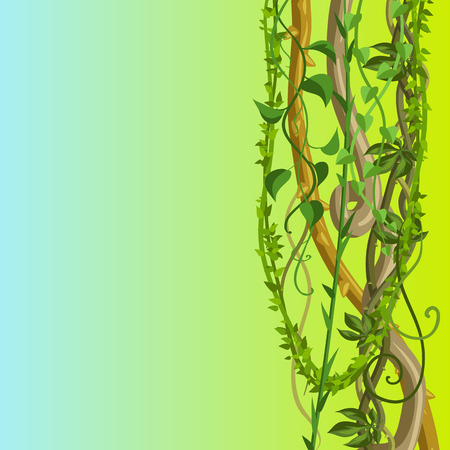 Twisted wild lianas branches background. Jungle vines plants. Woody natural tropical rainforest.