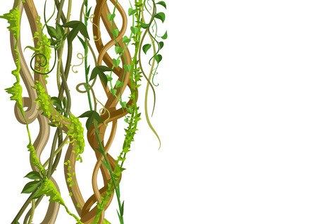 Twisted wild lianas branches banner. Jungle vines plants. Woody natural tropical rainforest. Ilustrace