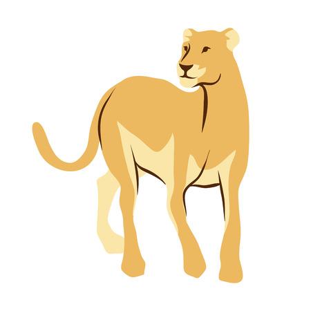 Stylized illustration of lioness. Wild African savanna animal on white background.