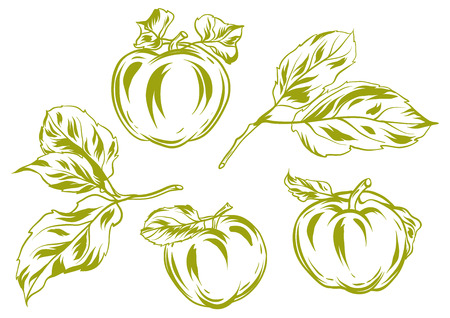 Set of apples and leaves. Stylized hand drawn fruits. Illustration