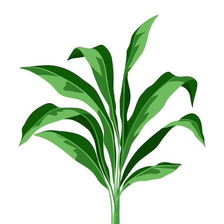 Tropical plant leaves on white background. Natural rainforest.