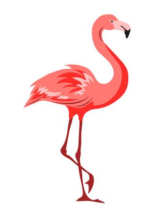 Illustration of pink flamingo. Tropical exotic bird isolated on white background.