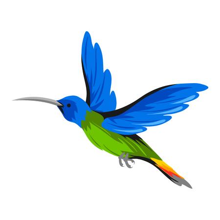 Ilustración de colibrí. Aves exóticas tropicales aisladas sobre fondo blanco.