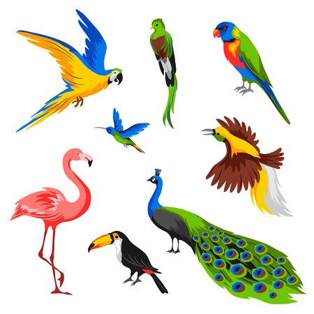 Set tropische exotische Vögel. Wilde Fauna des Dschungels und des Regenwaldes.