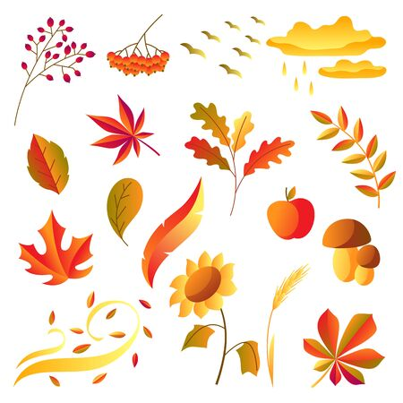 Set of stylized autumn items. Falling leaves, berries and plants. 일러스트