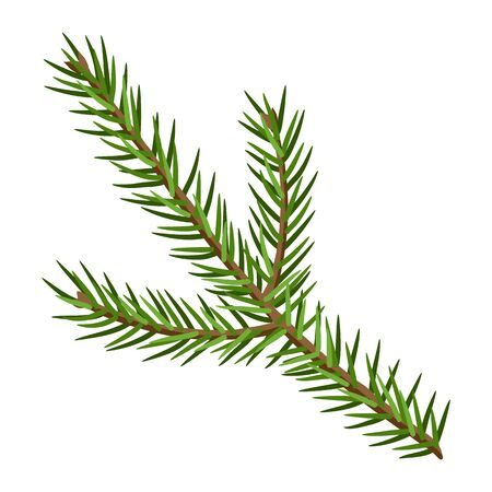 Illustration of fir branch. Stylized hand drawn image in retro style.