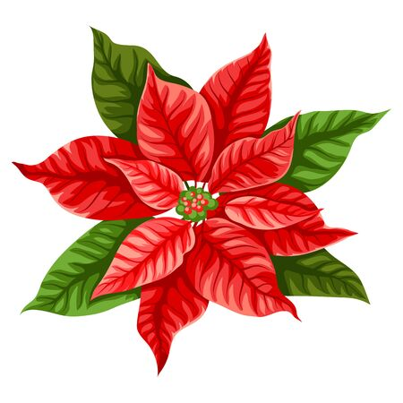 Illustration of poinsettia flower. Stylized hand drawn image in retro style. Foto de archivo - 130805565