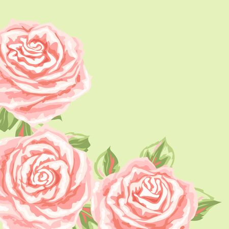 Background or card with pink roses. Beautiful realistic flowers, buds and leaves.