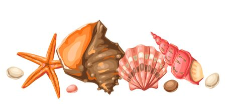Background with seashells. Tropical underwater mollusk shells decorative illustration.