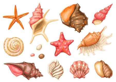 Set of seashells. Tropical underwater mollusk shells decorative illustration.