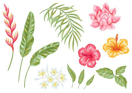 Set of tropical flowers and leaves. Decorative exotic foliage, palms and plants.