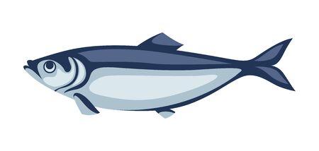 Illustration of herring fish. Pacific sardine. Seafood image.