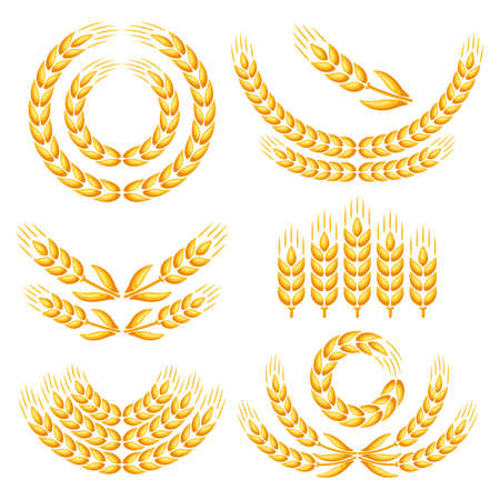 Design elements with wheat. Agricultural image natural golden ears of barley or rye.