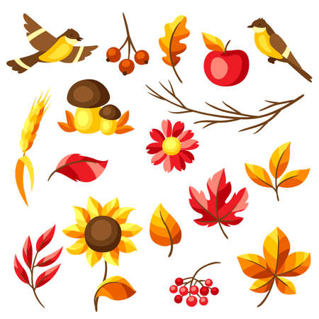 Set of autumn leaves and items. Illustration of foliage and flowers. Vector Illustration