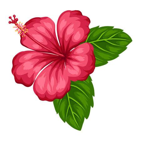 Illustration of tropical hibiscus flower. Decorative exotic plant.